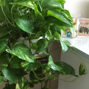 Look! I have kept a plant alive! Grandma Clumps would…