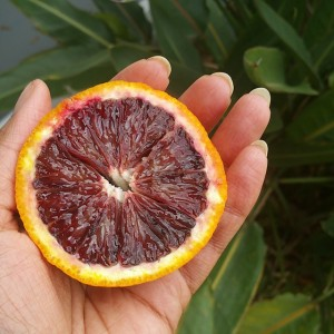My first time eating a blood orange. Creeps me out…